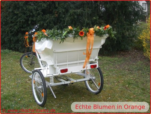 Echte Blumen in Orange